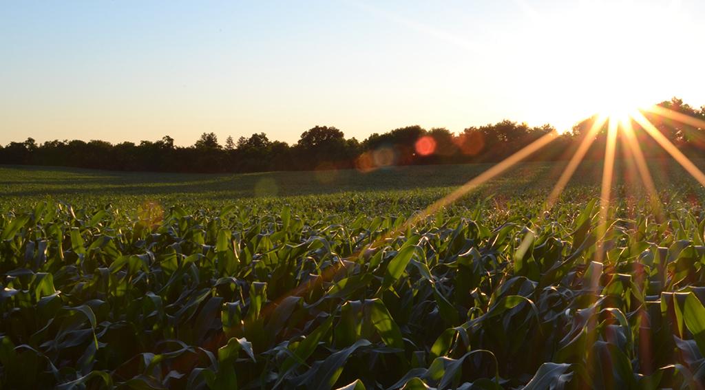 Thematisches Investieren: Pionier Rize ETF lanciert zwei neue ETFs für nachhaltige Ernährung und Bildung